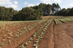 Ibiuna水坝-农业,圣保罗,巴西 库存图片