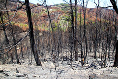 Ibiza after fire in May 2011 black spring Royalty Free Stock Photography