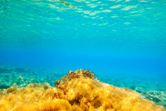 Ibiza Formentera underwater anemone seascape Royalty Free Stock Images