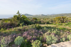 Ibiza heather landscape. In December in Ibiza, Balearic islands, Spain Royalty Free Stock Images