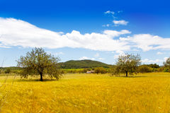 Ibiza island golden wheat fields of mediterranean Royalty Free Stock Image