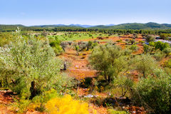 Ibiza island landscape with agriculture fields Royalty Free Stock Photos