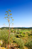 Ibiza island landscape with agriculture fields Stock Photography