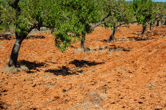 Ibiza island landscape with agriculture fields on red clay soil Royalty Free Stock Images