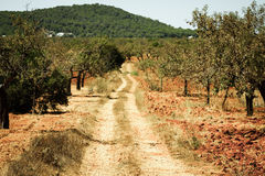 Ibiza island landscape with agriculture fields on red clay soil Stock Photo
