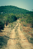 Ibiza island landscape with agriculture fields on red clay soil Stock Images