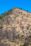Ibiza nach Schwarzfrühling des Feuers im Mai 2011 mit gebrannten Kiefern Stockfotos
