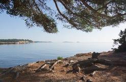 Ibiza naturalna krajobrazowa sosna Obrazy Stock