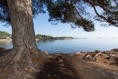 Ibiza naturalna krajobrazowa sosna Zdjęcie Royalty Free