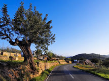 Ibiza Road Royalty Free Stock Images