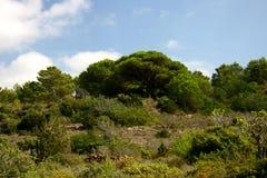 Ibiza selvaggio della natura Fotografia Stock Libera da Diritti