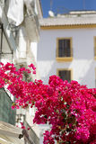 Ibiza town Royalty Free Stock Images