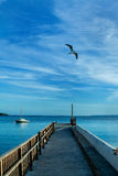 Ibiza wieczór morze z ptakiem i statkiem Obraz Stock