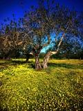 Ibiza winter flowerfield Stock Photos