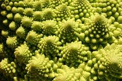 Ibrido del broccolo Immagini Stock