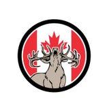 Icône canadienne de drapeau de Canada de cerfs communs de mâle Photographie stock