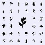 icône d'arbre de laurier de baie Ensemble universel d'icônes d'usines pour le Web et le mobile illustration de vecteur