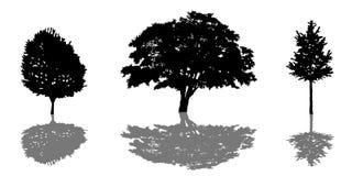 Icône de silhouette d'arbre réglée avec l'ombre Photo stock