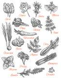 Icônes de croquis de vecteur de magasin d'épices des herbes illustration libre de droits