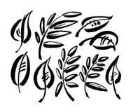 Icônes de feuille d'isolement sur le fond blanc Conception de signe de logo Illustration moderne d'encre de brosse Vecteur illustration stock