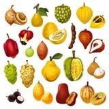 Icônes exotiques de vecteur de fruits tropicaux Illustration Stock