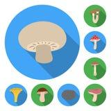 Icônes plates de champignon toxique et comestible dans la collection d'ensemble pour la conception Différents types d'actions de  illustration de vecteur