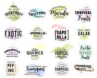 Icônes savoureuses exotiques de croquis de promo de fruits tropicaux Illustration Libre de Droits