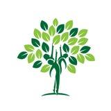 Icône d'arbre de feuille de famille Photo libre de droits