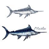 Icône de croquis d'isolement par vecteur de poissons de Marlin Photo libre de droits