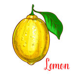 Icône de fruit d'isolement par croquis de vecteur de citron Photo libre de droits