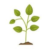 Icône de plante verte Images libres de droits