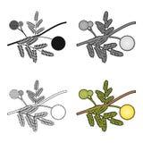 Icône jaune de fleur de mimosa dans le style de bande dessinée d'isolement sur le fond blanc Illustration de vecteur d'actions de Image stock