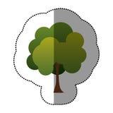 icône naturelle d'arbre de timbre de couleur Photos stock