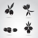 Icône olive réglée sur le fond blanc Photo libre de droits