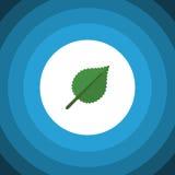 Icône plate d'isolement d'aulne Linden Vector Element Can Be a employé pour l'aulne, tilleul, concept de construction de feuille Photos libres de droits