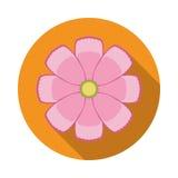 Icône plate de fleur de cosmos avec l'ombre Image stock