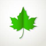 Icône plate verte de feuille d'érable sur le fond blanc Photographie stock