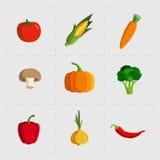 Icône végétale colorée réglée sur le fond blanc Photos libres de droits