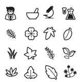 Icônes d'herbe réglées Photos stock