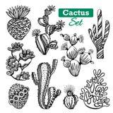 Icônes de cactus réglées Images stock