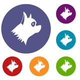Icônes de chien de Pinscher réglées Photos stock