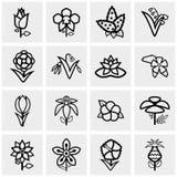 Icônes de fleur réglées sur le gris Photographie stock libre de droits