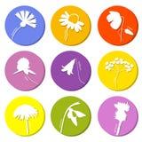 Icônes de fleurs sauvages réglées Images stock