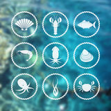 Icônes de fruits de mer réglées sur le fond de tache floue Image stock