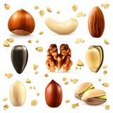 Icônes Nuts de vecteur illustration de vecteur