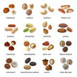 Icônes plates Nuts réglées Images libres de droits