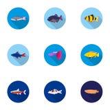 Icônes réglées de poissons d'aquarium dans le style plat Grande collection de symbole de vecteur de poissons d'aquarium Photographie stock