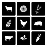 Icônes rurales réglées Photos stock