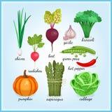 Icônes saines de légumes frais illustration libre de droits