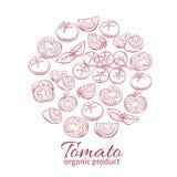 Icônes tirées par la main de tomate de vecteur réglées illustration libre de droits